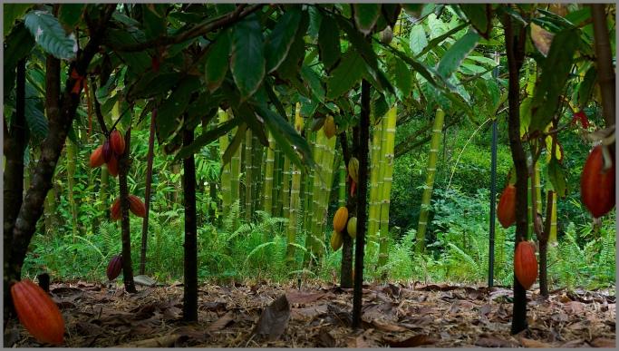 Kaua'i - Steel Grass - Rachelle's Photos